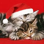 day-one-christmas-cats